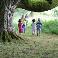 Kids Under  The Swining Tree