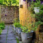 The Herb Garden in Bloom